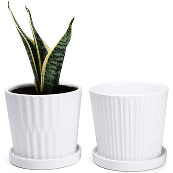 6 Inch White Cylinder Ceramic Indoor Planters Pot with Attached Saucers