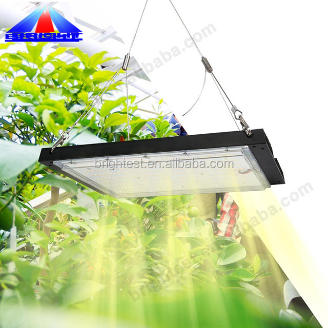 Waterproof Led Grow Light Full Spectrum Quantum Board Kit LM301B LM301H Mixing 660nm HLG Strip Grow Light