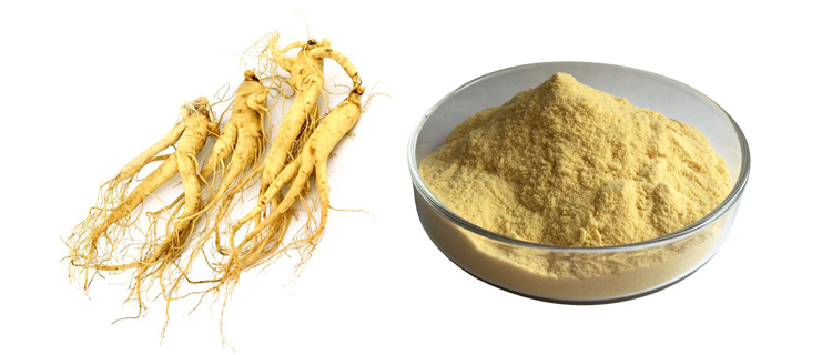 Natural Ginseng Extract Powder Ginsenosides