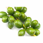 Green Coffee Bean Extract Green Coffee Extract Custom High Quality Green Coffee Bean Extract