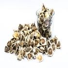 Natural Moringa Seeds for Extraction Purpose