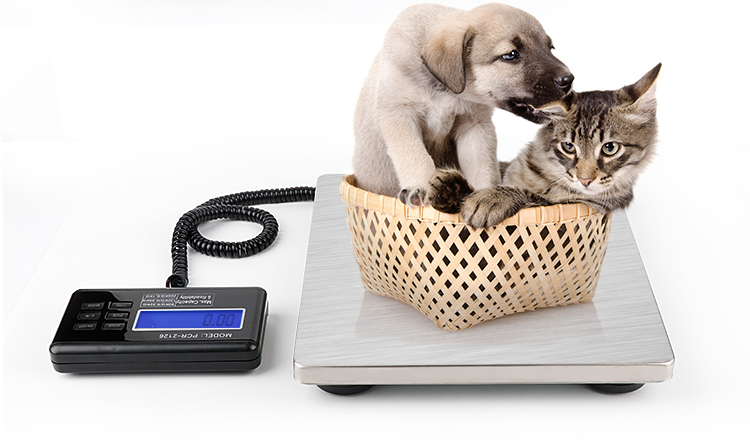 Portable  Multifunctional Electronic Pet Scale  Digital Postal  Weighing Scale