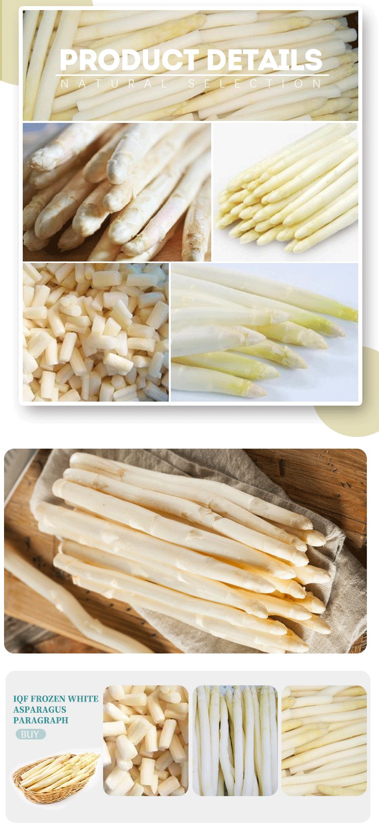 Iqf Frozen White Asparagus Paragraph Buy Frozen White Asparagus Paragraph Dress White Asparagus Product On Alibaba Com
