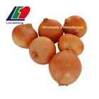 Superior China Onion Prices, Onions In Bulk, Yellow Holland Onions