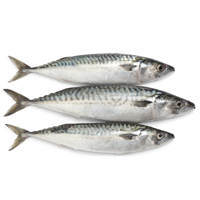 china frozen types of pacific chinese horse mackerel <strong>fishes</strong> whole round prices