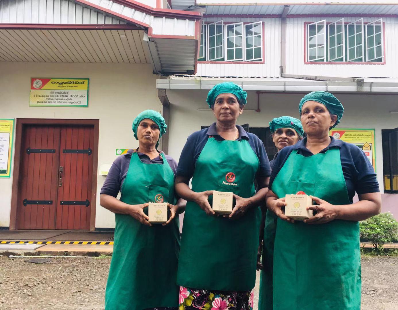 White tea from Sri Lanka PMD license - 4uTea | 4uTea.com