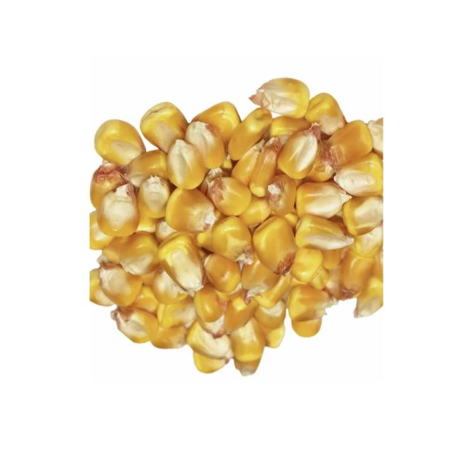 Yellow Corn & White Corn Maize for Human & Animal Feed
