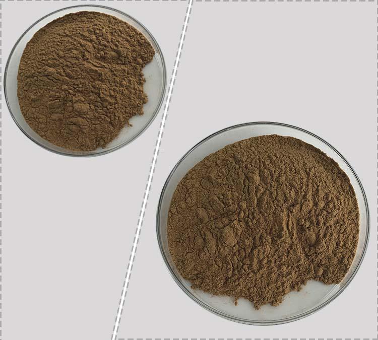 Best Price Celery Seed Extract Powder 98% Apigenin