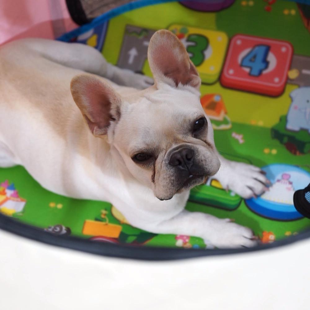 Portatile Pieghevole Pet Box Pieghevole Ciotola Da Viaggio | Indoor/uso Esterno | Water Resistant | Rimovibile Ombra Copertina | cani/Cat