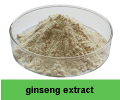 Natural Ginkgo Biloba Leaf Extract Powder