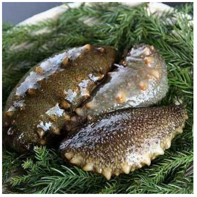 Japan high quality lower price sea cucumber dry