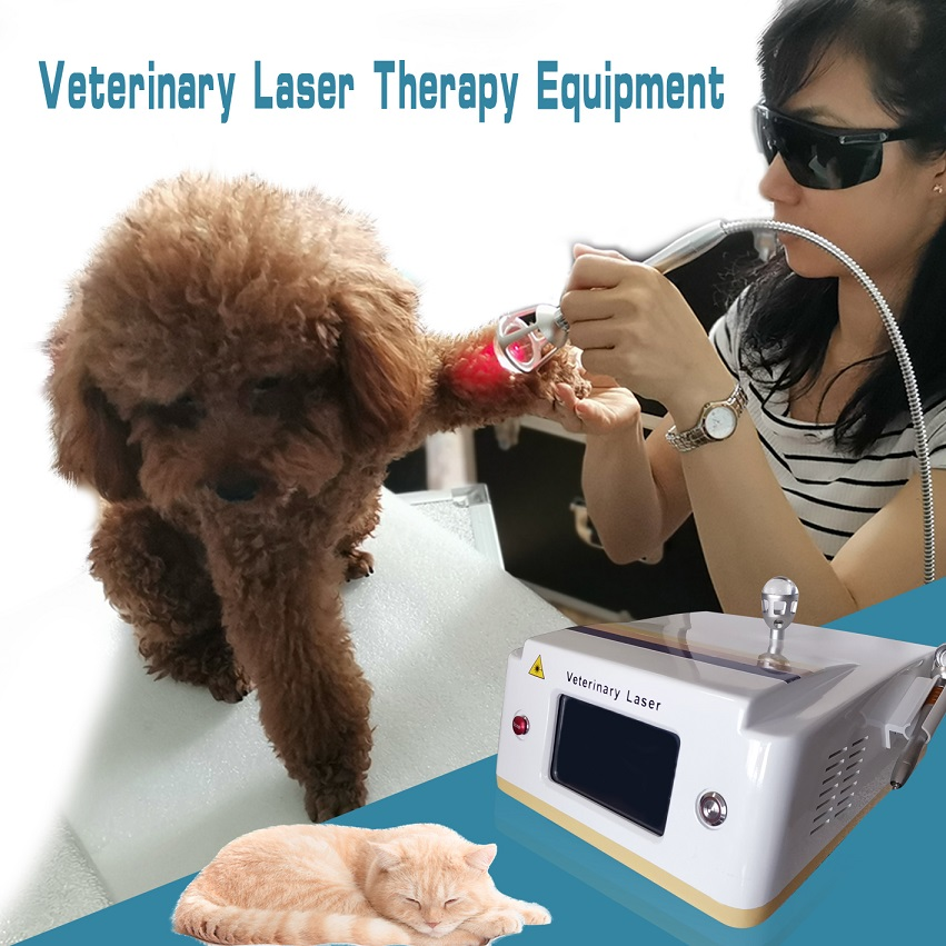 LLLT Veterinary cold laser therapy equipment for animal pain relief