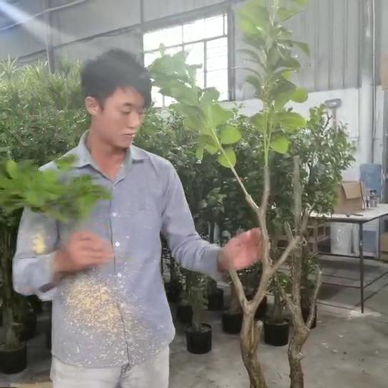 Faça plantas artificiais de bananeira de plástico