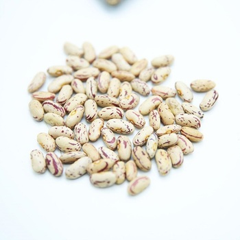 New Crop Light Speckled Kidney Beans LKSB Dried Pinto Beans