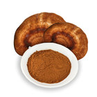 herbal supplements Red Reishi Ganoderma Pure Herbs Extract Powder