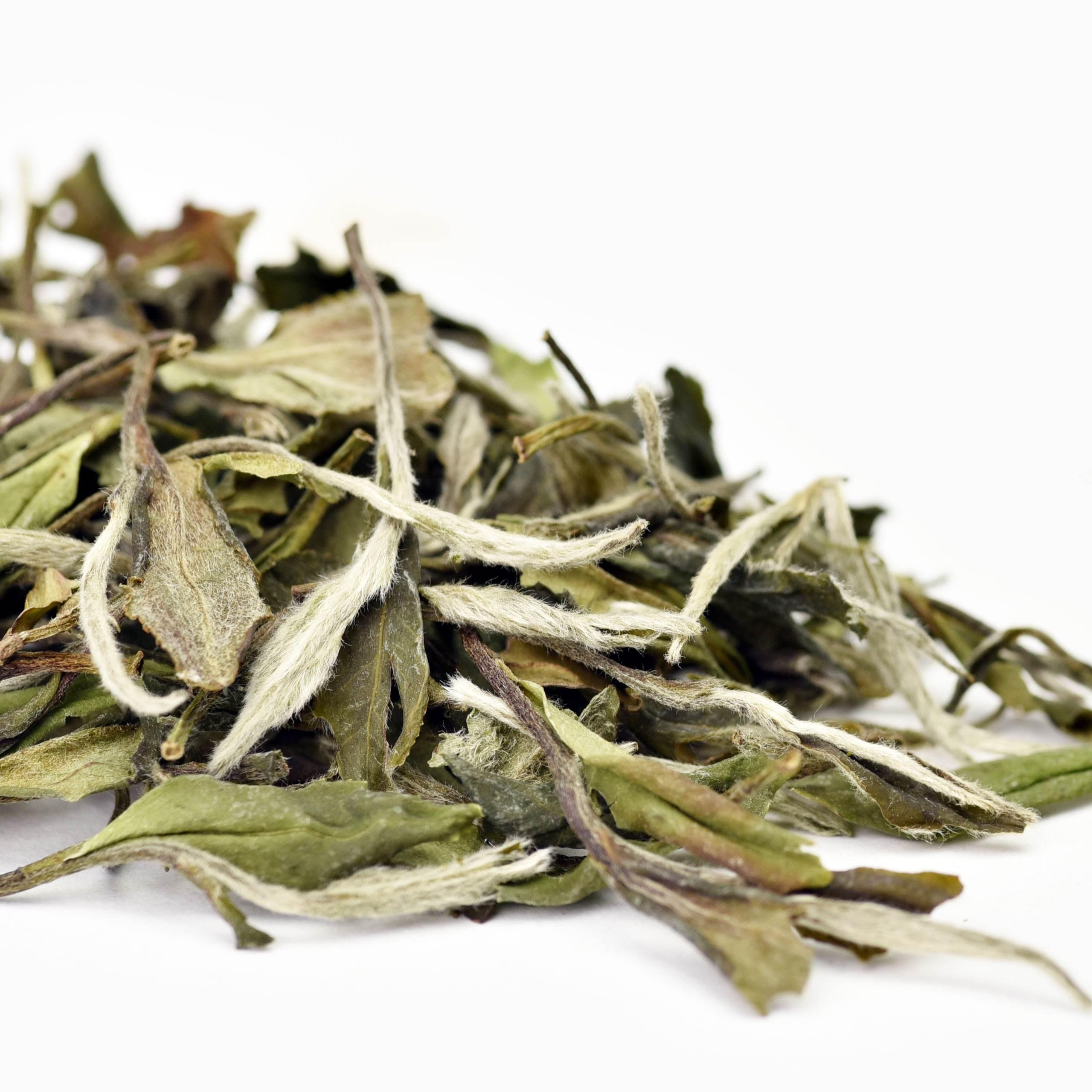 Mutan White Tea Organic Loose leaf tea White Peony - 4uTea | 4uTea.com
