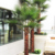 Shopping Mall Hotel Decoration Artificial Palm Tree On Sales