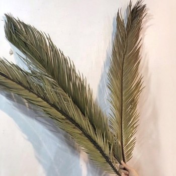 M-1409 High Quality 5pcs/bundle Dried Natural Brown Palm Pampas Grass Leaves