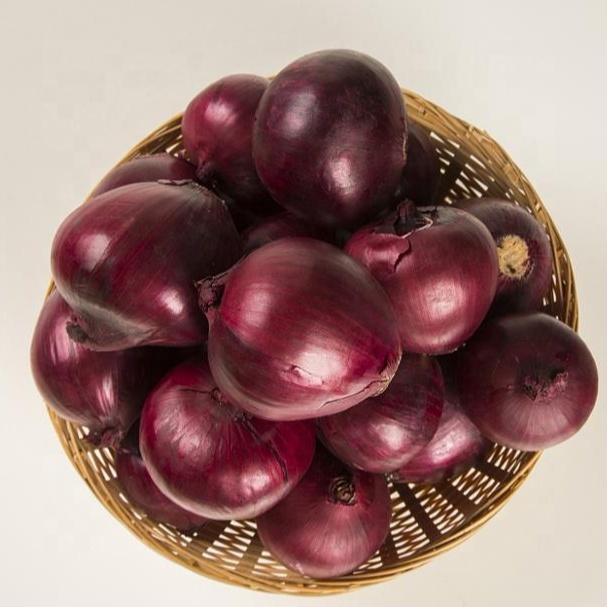 china market price fresh red big onion/onion seeds selling