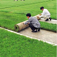 Chinese High Quality Wholesale Garden And Home Landscaping Decoration Buffalo Artificial Turf Grass For Garden