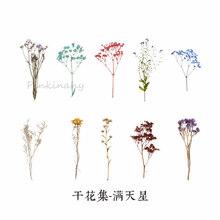 Винтажные осенние растения цветы пуля журнал декоративные наклейки дневник стационарный японский альбом стикеры Скрапбукинг(Китай)