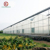 Arch/Gothic/Sawtooth multi-span poly film greenhouse with complete systems