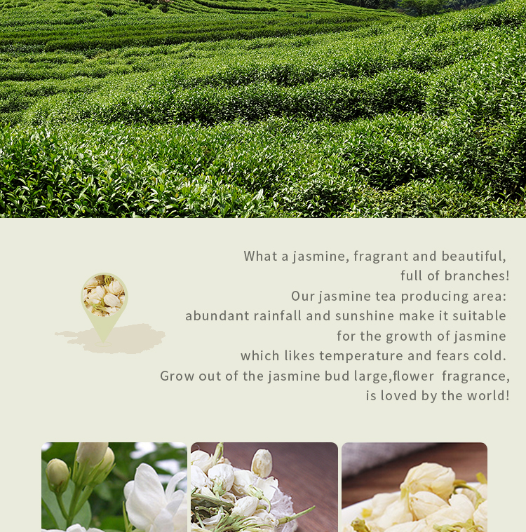 Jasmine flower bud jasmine flower tea strong fragrance tea special grade new flower tea stem - 4uTea   4uTea.com