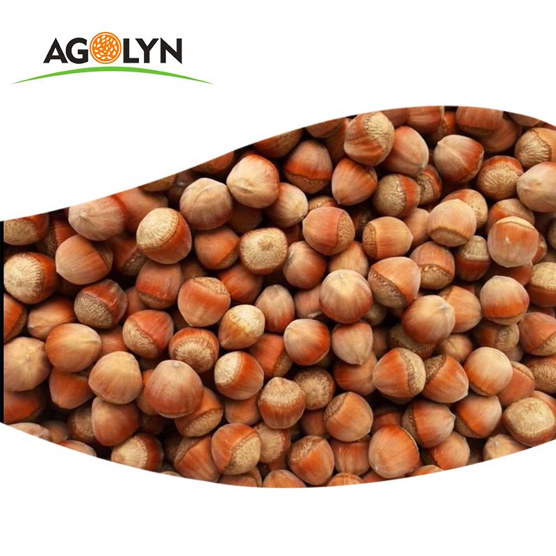 AGOLYN Shell Raw Hazelnut Kernels
