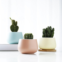 New products Plants Flower pots cute Succulent pots ceramic