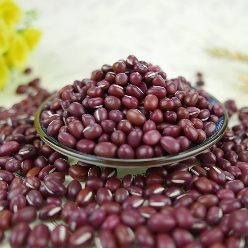 high quality small red beans adzuki beans for big size