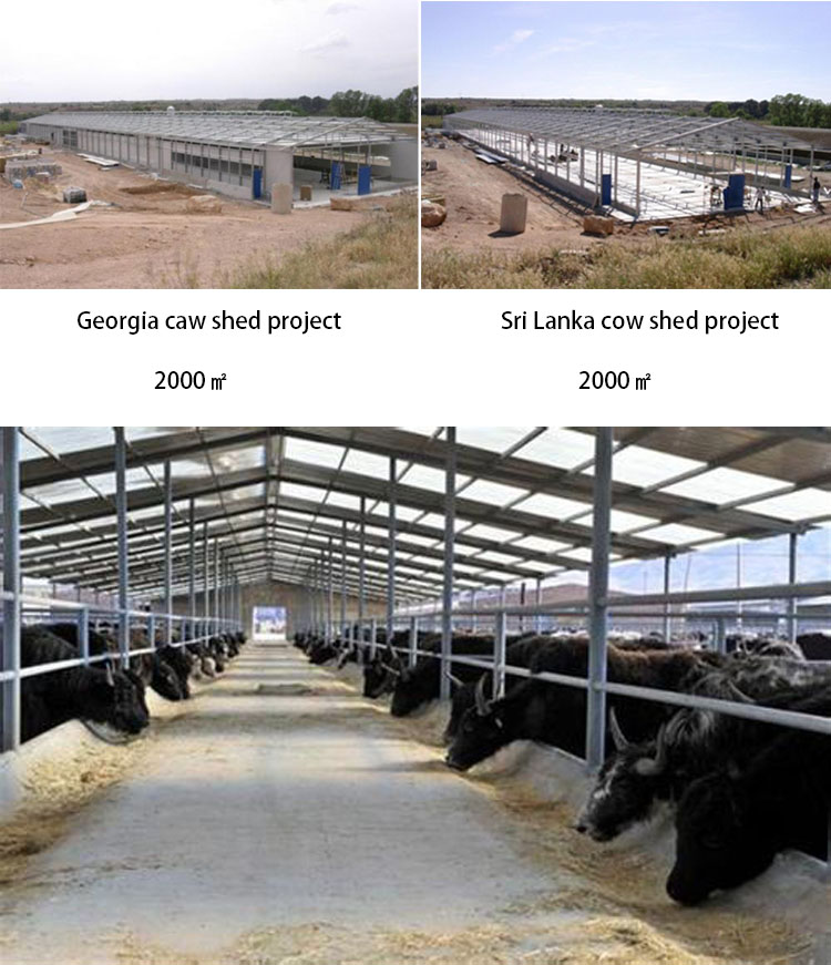 prefabricated animal farming house steel structure pig farm shed house
