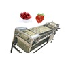 Automatic Apple Grading Potato Dates Blueberry Fruit Sorting Machine