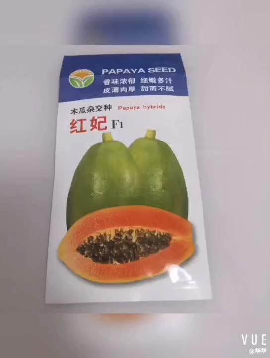 Semillas híbridas de papaya f1 de buena calidad