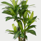 Artificial Dragon Plant tree for decoration garden hotel home