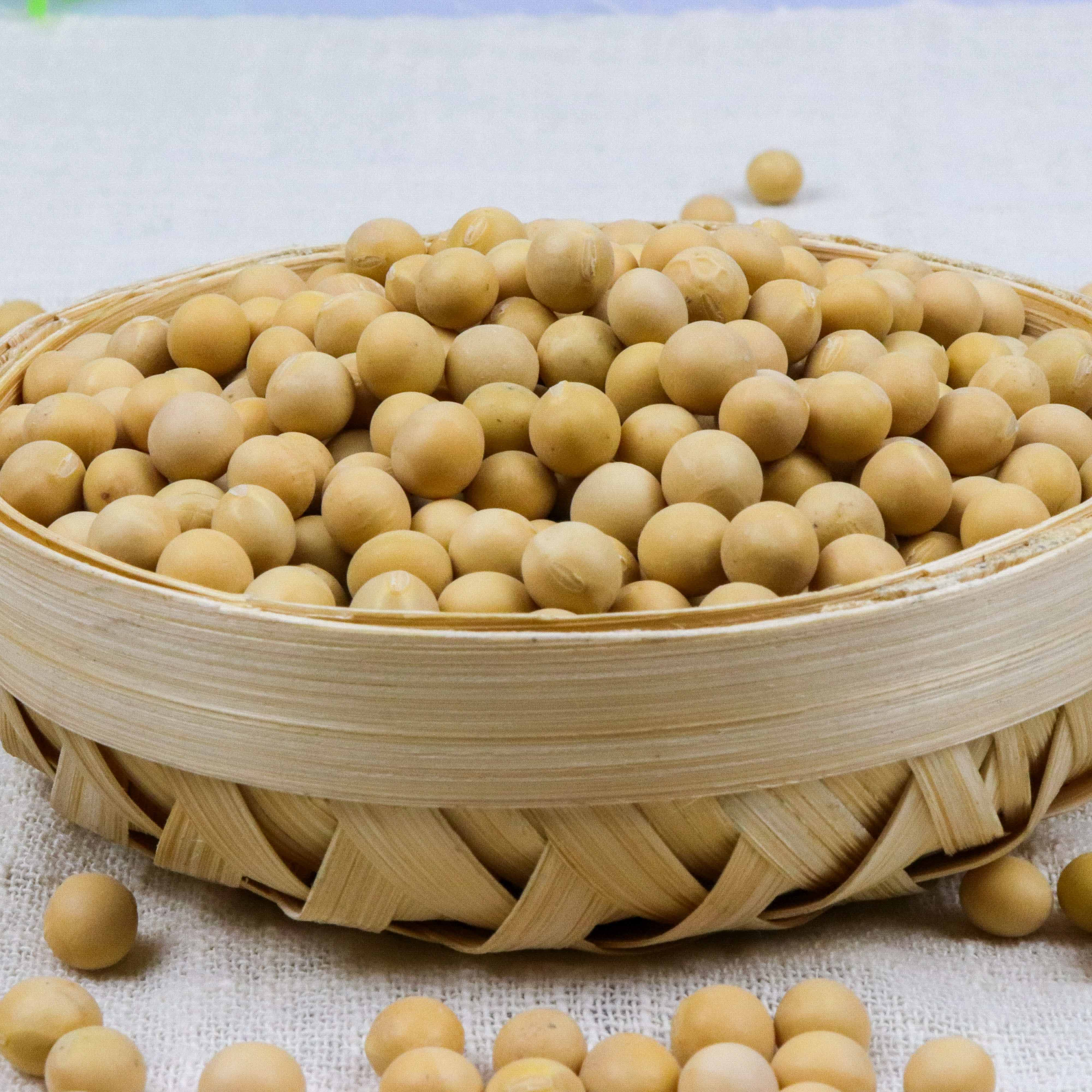 China Soya Bean Non Gmo Soybeans Soya Beans