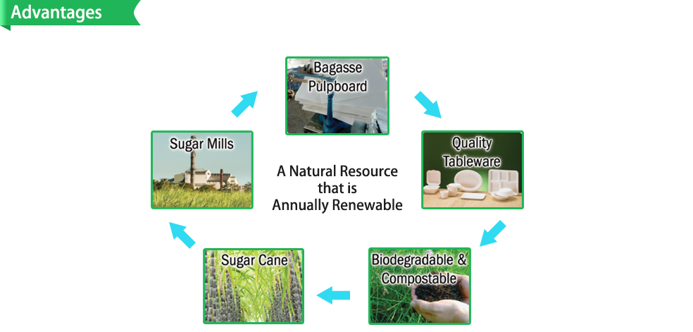 """Biodegradable Disposable Sugarcane Bagasse Plates (6"""",7"""",8"""",9"""" inch,Round,Square,Oval)"""