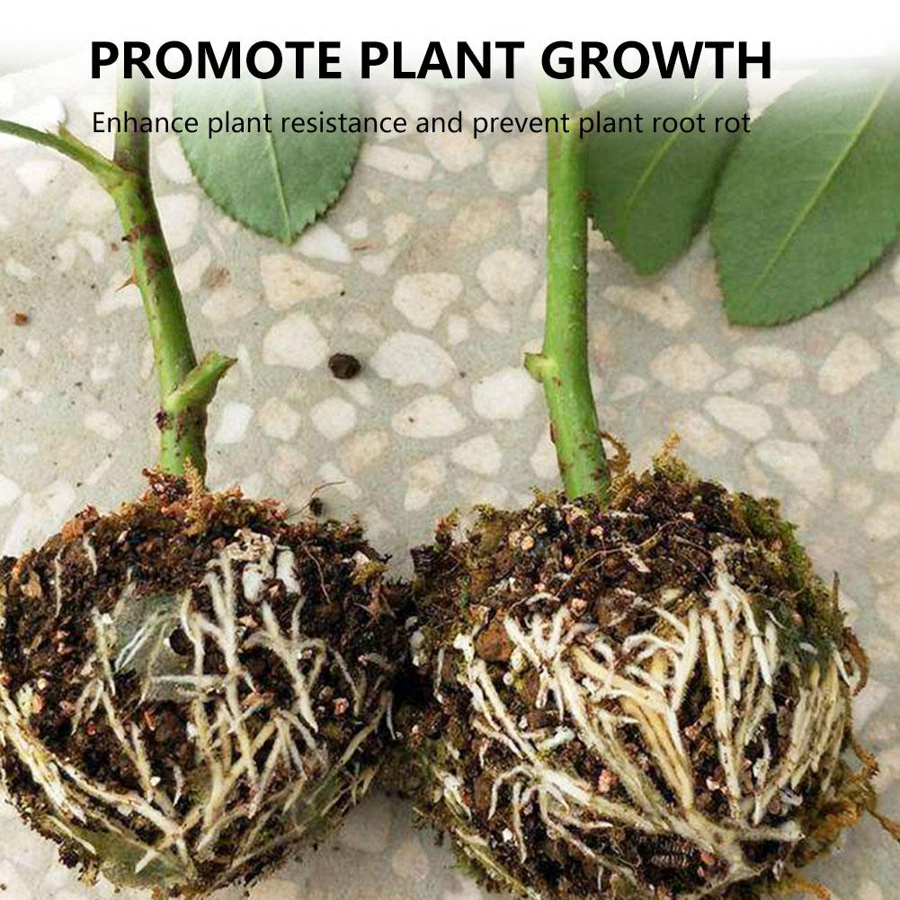 High Pressure Propagation Ball Box Grafting Plastic Plant for Various Plants Effective Asexual Reproduction Equipment 3PCS Plant Rooting Device Assisted Cutting Rooting