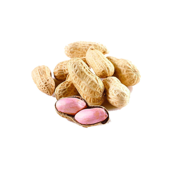 High Quality Ground Nut Exporter Raw Shelled Fresh Peanuts