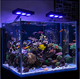 New Fish Mini Tank Air Bubble Increase Oxygen dimmable aquarium in lightings