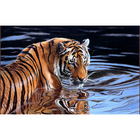 SICHUANG Drop Shipping Oil Painting By Numbers Animal Tiger For Wholesale Acrylic Paint By Number Painting For Living Room Wall