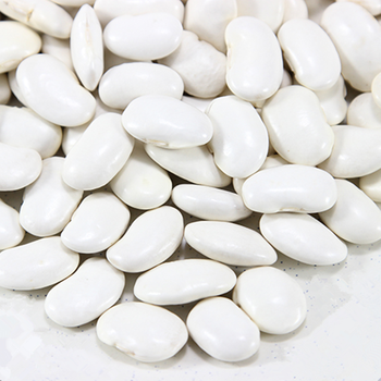 Dried Large White Kidney Bean For Canned Food