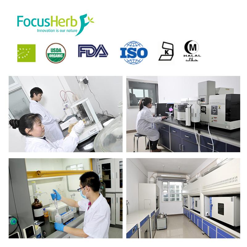 FocusHerb OPC Proanthocyanidins 95% Grape Seed Extract