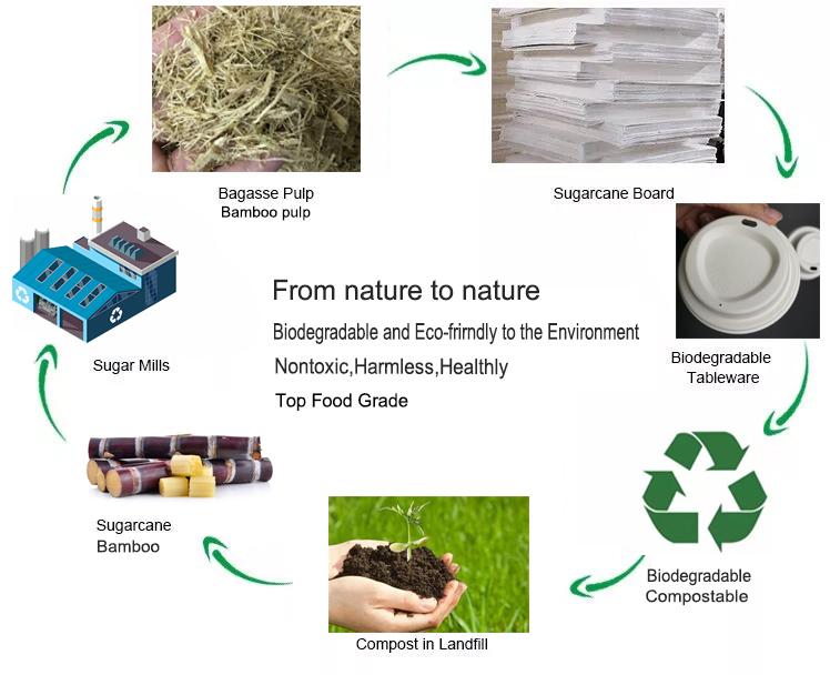 गर्म बेच के लिए biodegradable प्रयोज्य कागज खाद्य ट्रे फल