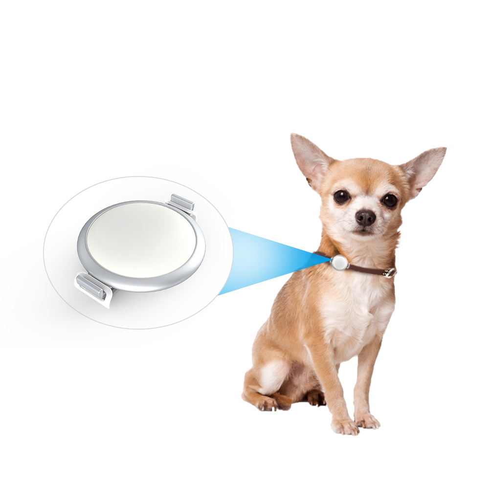 High Quality Smart Pet Activity Tracker Pet Pedometer for Dogs Pets Daily Activities Support iOS and Android System