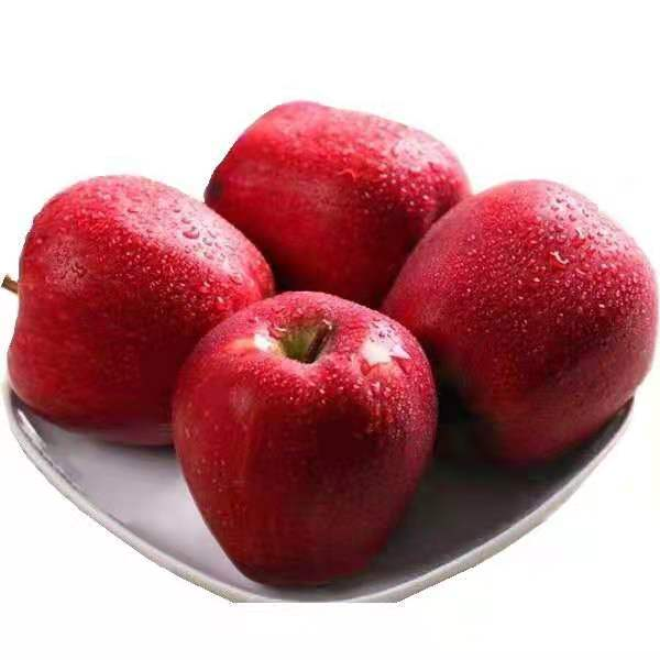 China Fresh red delicious fruit huaniu <strong>apple</strong>