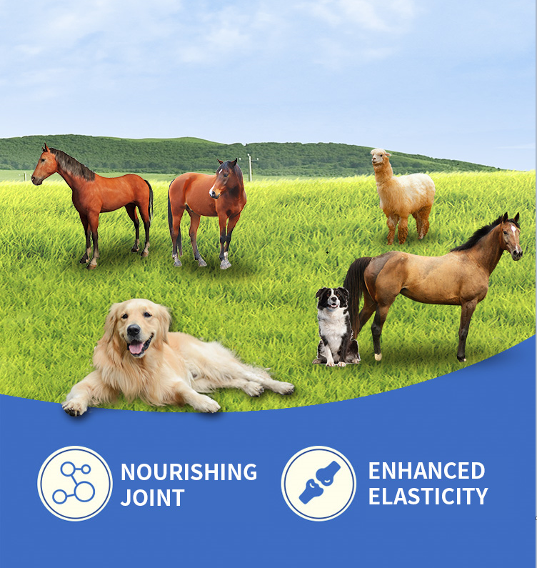 Joint injection Chondroitin Sulfate injection solution for racehorses manufacturer