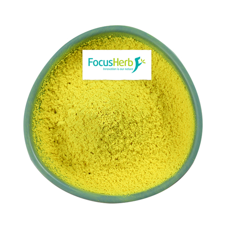 FocusHerb Sophora Japonica Extract <strong>Powder</strong> Quercetin
