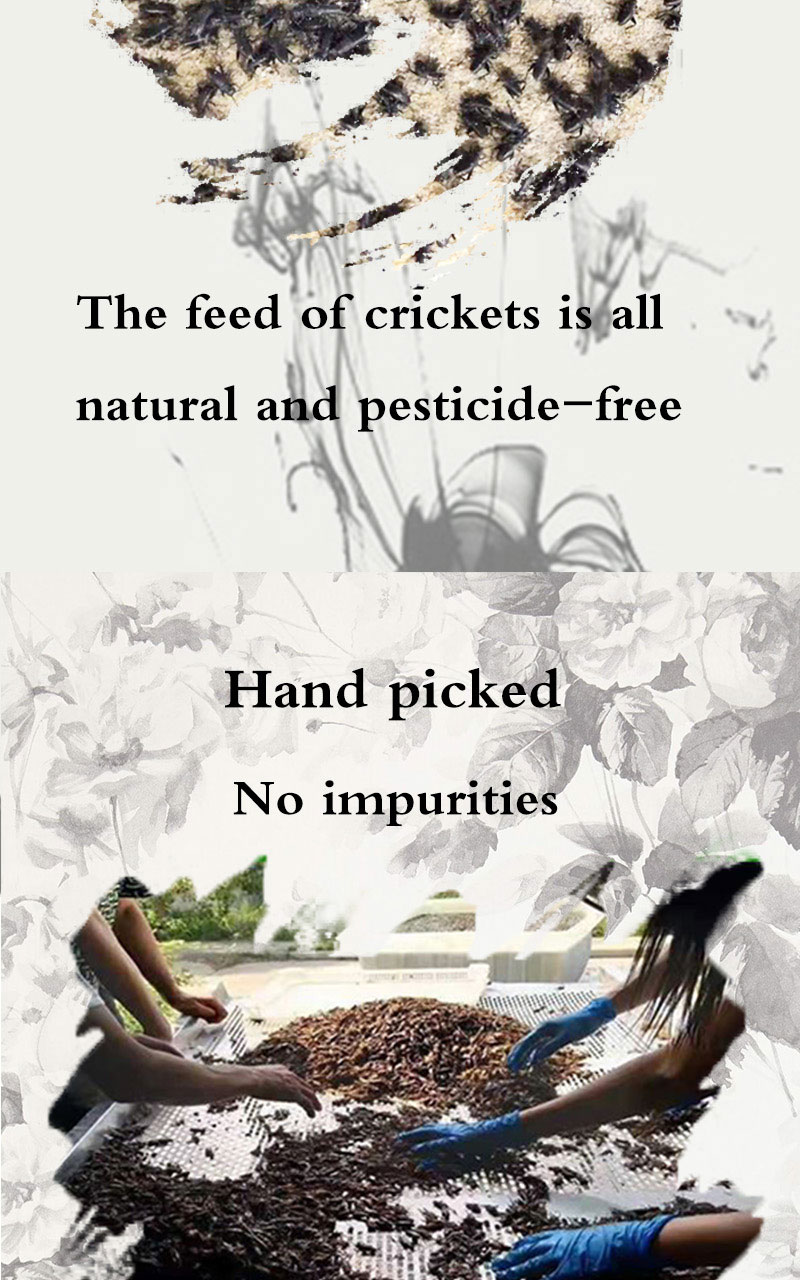 Discount Pet Food Dried Crickets Manufacturer farms