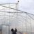 Manufacture single span cold frame greenhouse film covering with hydroponics equipment for sale