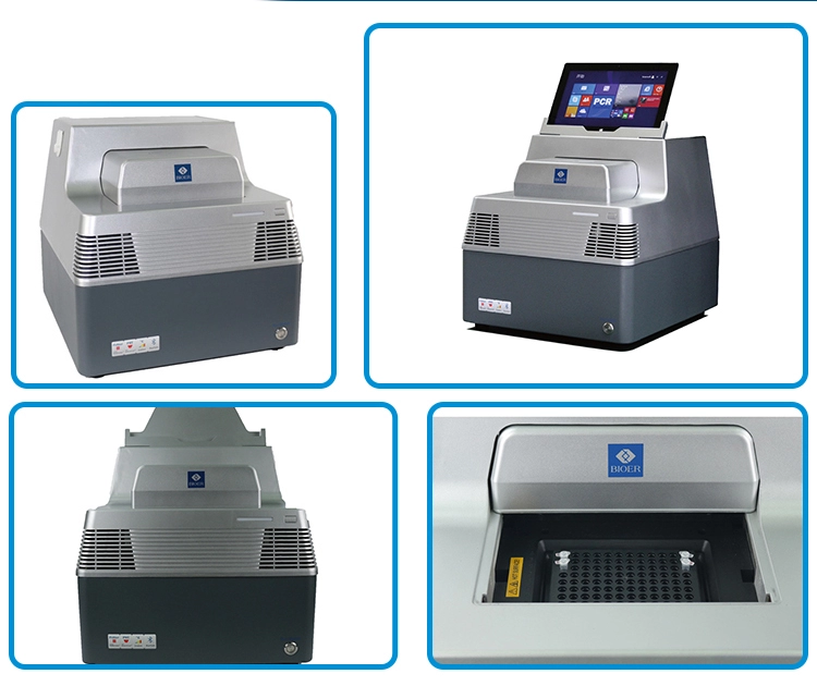 Factory Professional Real Time Pcr Price Linegene 9600 Plus For Sale